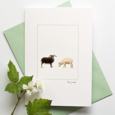 Soay Sheep Card