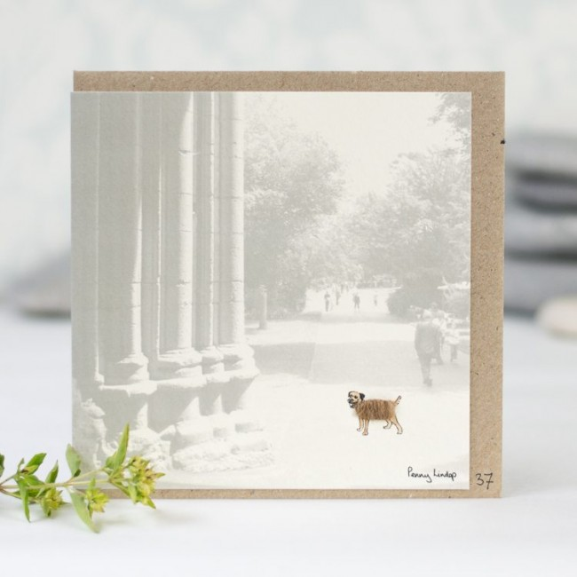 Border Terrier Photographic Greeting Card