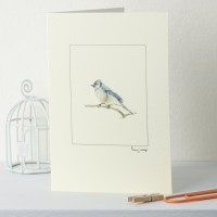 Bluejay Bird Card