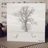 Sheep & Tree Photographic Card