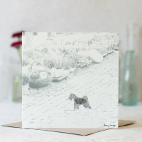 Dog Photographic Card with a Schnauzer