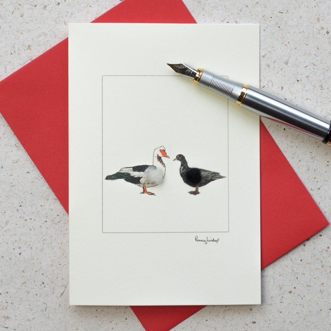 Duck Card - Muscovy Ducks