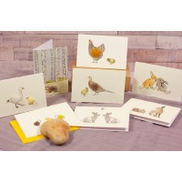 Boxed Collection of Spring Themed Gift Cards - 8 cards