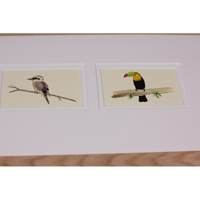 Framed Gift Cards - Exotic Birds