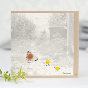 Fluffy hen and chicks photographic card