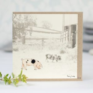 Gloucester Old Spot Pigs photographic card